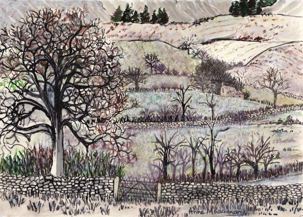 Jodi's tree